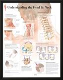 Understanding The Head & Neck Posters
