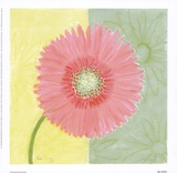 Pink Daisy Prints by Dona Turner