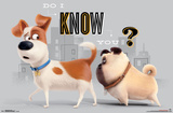Secret Life Of Pets- Do I Know You Prints
