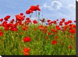 Field Of Poppies - Panoramic View Impressão em tela esticada por Melanie Viola