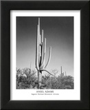 Saguaro National Monument Arizona Posters by Ansel Adams