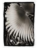 Palm Frond II v2 Poster von Debra Van Swearingen