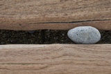 Groynes, abstract view of pebble stuck in weathered timber, West Runton, Norfolk Photographic Print by David Burton