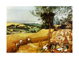 La Moisson Alu-Dibond von Pierre Bruegel