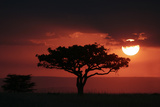 Tree silhouetted at sunset, Masai Mara, Kenya Photographic Print by Martin Withers