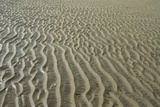 Ripples in sand, inter-tidal sands on coast, North Norfolk, England Photographic Print by Gary Smith