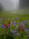 Misty forest pool with broadleaf lupin and magenta paintbrush, near Dewey Lake, Mount Rainier Photographic Print by Bob Gibbons