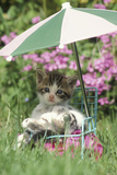 Domestic Cat, kitten sitting on miniature sun lounger under umbrella in garden Photographic Print by Angela Hampton