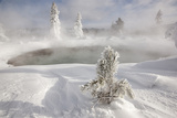 Frost covered trees and snow in thermal basin, Tire Pool, Midway Geyser Basin, Yellowstone Fotografisk tryk af Allen Lloyd