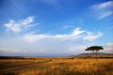 View of grassland habitat and acacia tree, Masai Mara, Kenya, August Photographic Print by Ben Sadd