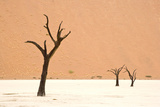 Dead trees in desert clay pan, Deadvlei, Namib-Naukluft , Namib Desert Photographic Print by Andrew Linscott