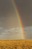 Rainbow over savannah habitat in evening sunlight, Masai Mara National Reserve, Kenya, August Photographic Print by Bernd Rohrschneider