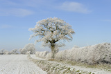 View of arable farmland with track, hedgerow and trees covered with rime frost, Norfolk, England Photographic Print by Gary Smith