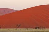 View of acacia trees and desert sand dunes, Sossusvlei, Namib Desert, Namib-Naukluft Photographic Print by Shem Compion