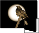 Fiery-necked Nightjar (Caprimulgus pectoralis) adult, perched on branch, Okavango Delta Poster by Shem Compion