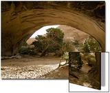 Trees and natural sandstone arch in desert, Navajo Arch, Arches , Utah Plakater av Bob Gibbons