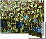 Ocellated Lizard (Timon lepidus) adult, close-up of skin texture, Italy, june Kunstdrucke von Fabio Pupin