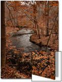 River in autumn woodland habitat, Cross River, Ward Poundridge County Park, Salem Posters av Bob Gibbons