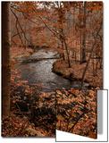 Bob Gibbons - River in autumn woodland habitat, Cross River, Ward Poundridge County Park, Salem Obrazy