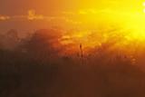 View of swamp habitat at sunrise, Everglades, Florida, USA Photographic Print by David Tipling