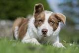 Domestic Dog Photographic Print by Wayne Hutchinson