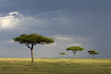 View of savannah habitat with rainclouds, Masai Mara, Kenya Photographic Print by Malcolm Schuyl