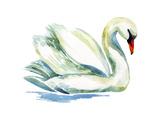 Watercolor Swan. Art by  tanycya