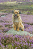 Domestic Dog Photographic Print by Mike Powles