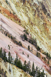 View of canyon slope with oxidizing rocks, Grand Canyon of Yellowstone, Yellowstone , Wyoming Photographic Print by Bill Coster