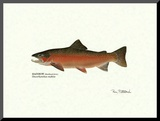Rainbow Steelhead Male Mounted Print by Ron Pittard