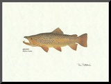 Brown Trout Mounted Print by Ron Pittard