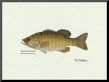Smallmouth Bass Fish Mounted Print by Ron Pittard