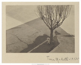 Tina Modotti, Tree with Dog, 1924 Posters by Tina Modotti