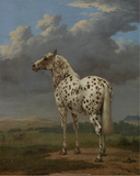 "The ""Piebald"" Horse, 1650-54 Prints by Paulus Potter"