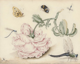 A Rose and Five Insects (1618) Posters by Christoffel van den Berghe
