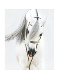 Dream Horse Prints by Kari Brooks