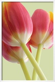 Bloom Prints by Phil Gleissner