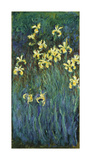 Yellow Irises, c.1914-17 Premium Giclee Print by Claude Monet