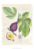 Watercolor Fruit I Prints by Naomi McCavitt