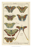 Histoire Naturelle Butterflies III Giclee Print by  Unknown