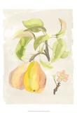 Watercolor Fruit III Art by Naomi McCavitt