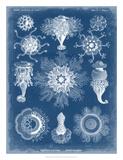 Marine Blueprint I Giclee Print by Vision Studio