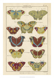 Histoire Naturelle Butterflies V Giclee Print by  Unknown
