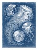 Marine Blueprint II Giclee Print by Vision Studio