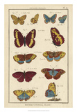 Histoire Naturelle Butterflies IV Giclee Print by  Unknown