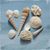 Shell Collection II Prints by Bill Philip