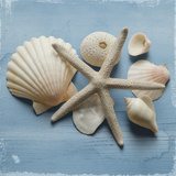 Shell Collection I Print by Bill Philip