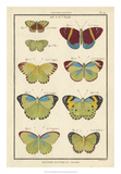 Histoire Naturelle Butterflies II Giclee Print by  Unknown
