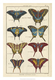 Histoire Naturelle Butterflies VI Giclee Print by  Unknown