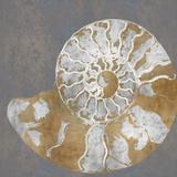 Nautilus II Giclée-tryk af Mark Chandon